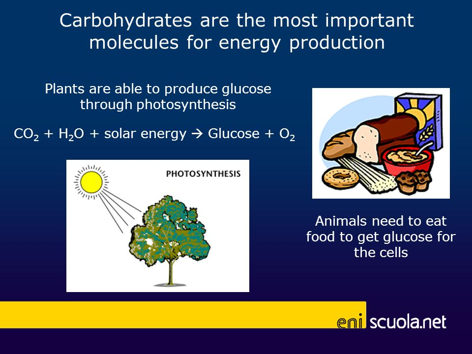 Carbohydrates are the most important molecules for energy production Plants are able to produce glucose through photosynthesis CO 2 + H 2 O + solar en