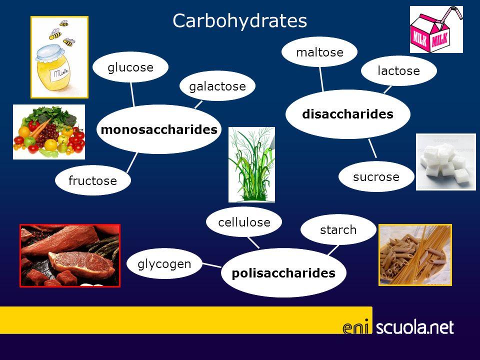 Carbohydrates monosaccharides glucose fructose galactose polisaccharides cellulose starch glycogen disaccharides maltose lactose sucrose
