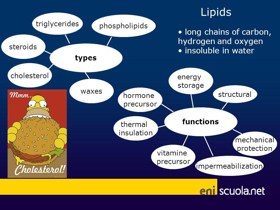 Lipids functions energy storage hormone precursor structural impermeabilization thermal insulation vitamine precursor mechanical protection types trig