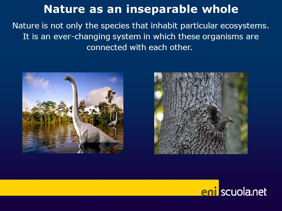Nature as an inseparable whole Nature is not only the species that inhabit particular ecosystems.