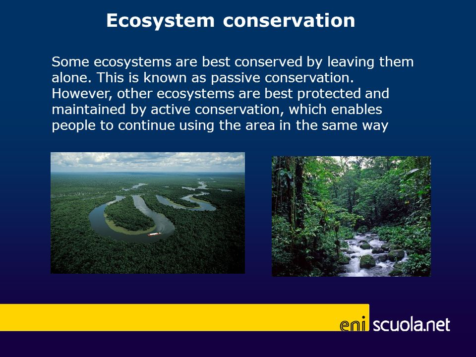 Ecosystem conservation Some ecosystems are best conserved by leaving them alone.