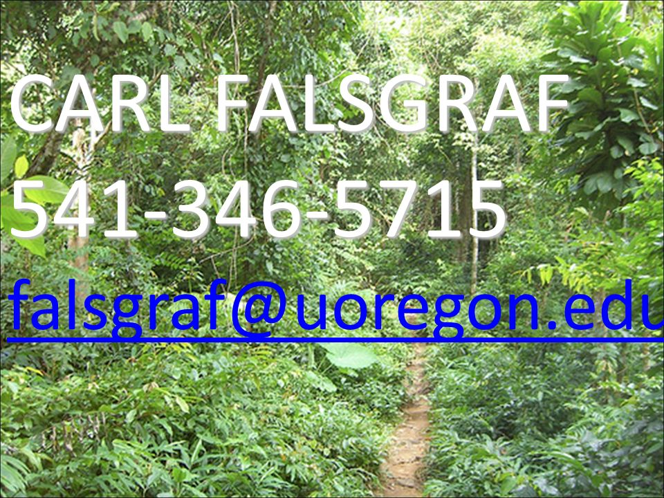 CARL FALSGRAF 541-346-5715 falsgraf@uoregon.edu