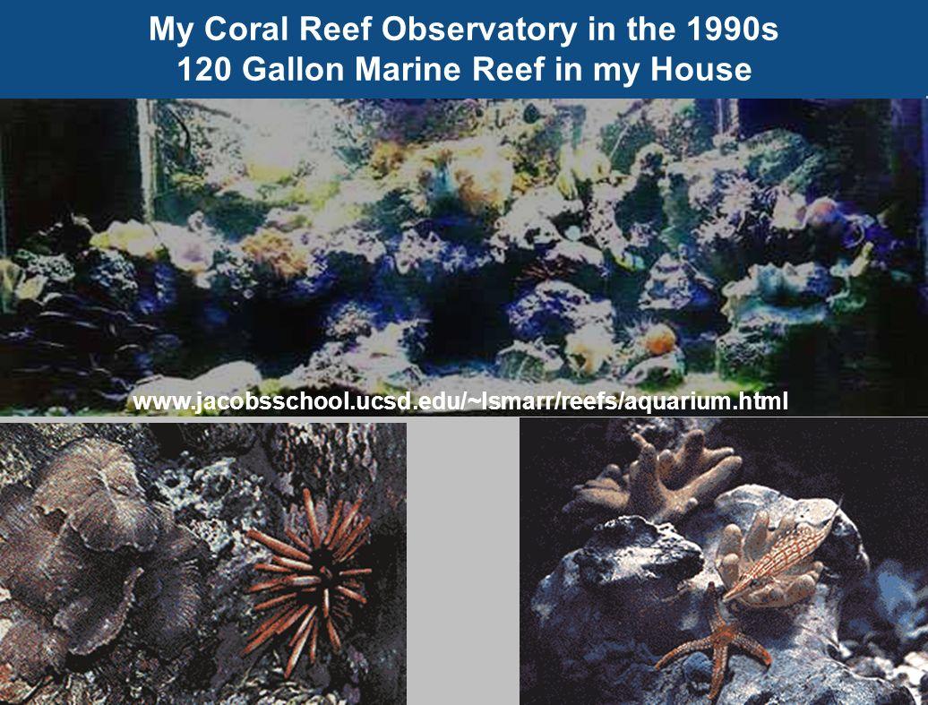 My Coral Reef Observatory in the 1990s 120 Gallon Marine Reef in my House www.jacobsschool.ucsd.edu/~lsmarr/reefs/aquarium.html