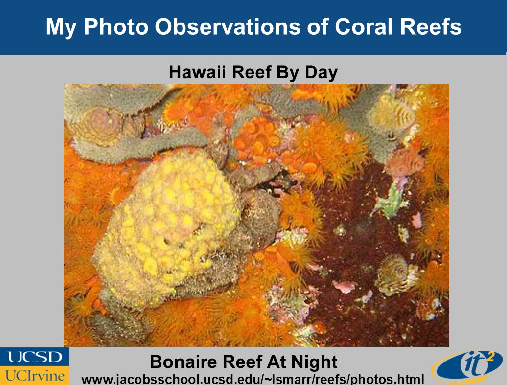 My Photo Observations of Coral Reefs Hawaii Reef By Day Bonaire Reef At Night www.jacobsschool.ucsd.edu/~lsmarr/reefs/photos.html