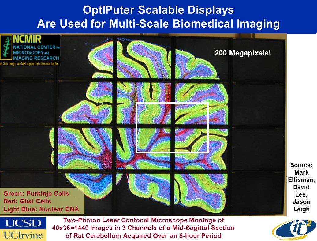 OptIPuter Scalable Displays Are Used for Multi-Scale Biomedical Imaging Green: Purkinje Cells Red: Glial Cells Light Blue: Nuclear DNA Source: Mark Ellisman, David Lee, Jason Leigh Two-Photon Laser Confocal Microscope Montage of 40x36=1440 Images in 3 Channels of a Mid-Sagittal Section of Rat Cerebellum Acquired Over an 8-hour Period 200 Megapixels!