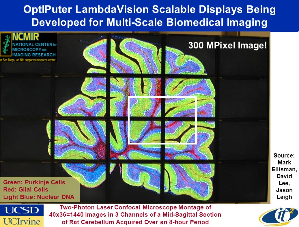 OptIPuter LambdaVision Scalable Displays Being Developed for Multi-Scale Biomedical Imaging Green: Purkinje Cells Red: Glial Cells Light Blue: Nuclear DNA Source: Mark Ellisman, David Lee, Jason Leigh Two-Photon Laser Confocal Microscope Montage of 40x36=1440 Images in 3 Channels of a Mid-Sagittal Section of Rat Cerebellum Acquired Over an 8-hour Period 300 MPixel Image!