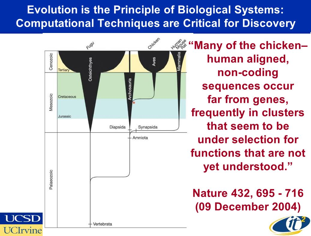 Evolution is the Principle of Biological Systems: Computational Techniques are Critical for Discovery Many of the chicken– human aligned, non-coding sequences occur far from genes, frequently in clusters that seem to be under selection for functions that are not yet understood.