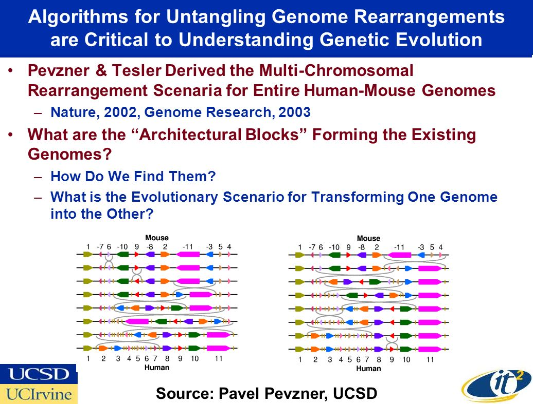 Algorithms for Untangling Genome Rearrangements are Critical to Understanding Genetic Evolution Pevzner & Tesler Derived the Multi-Chromosomal Rearrangement Scenaria for Entire Human-Mouse Genomes –Nature, 2002, Genome Research, 2003 What are the Architectural Blocks Forming the Existing Genomes.