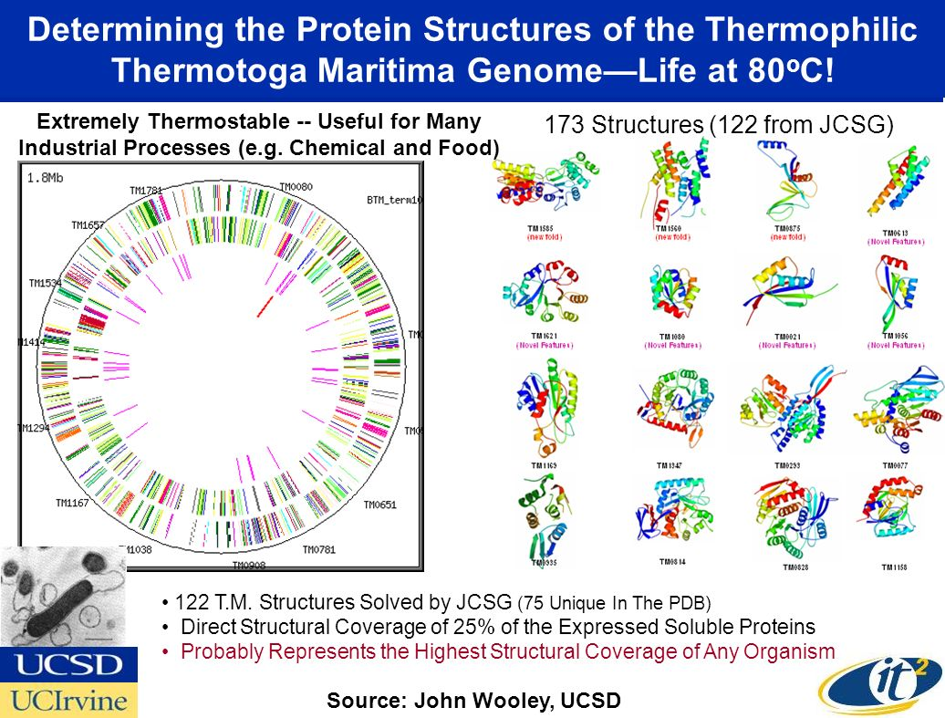 Determining the Protein Structures of the Thermophilic Thermotoga Maritima GenomeLife at 80 o C.