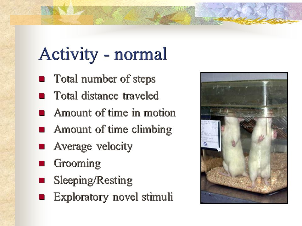 Activity - normal Total number of steps Total distance traveled Amount of time in motion Amount of time climbing Average velocity Grooming Sleeping/Re