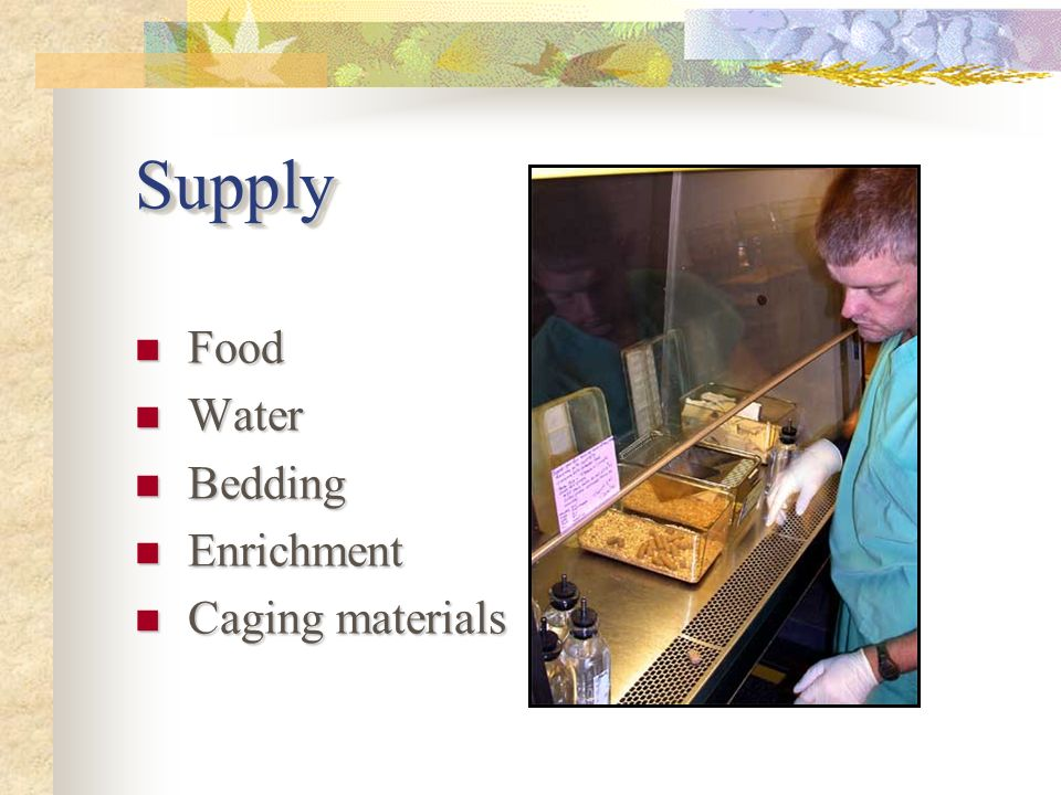 SupplySupply Food Food Water Water Bedding Bedding Enrichment Enrichment Caging materials Caging materials
