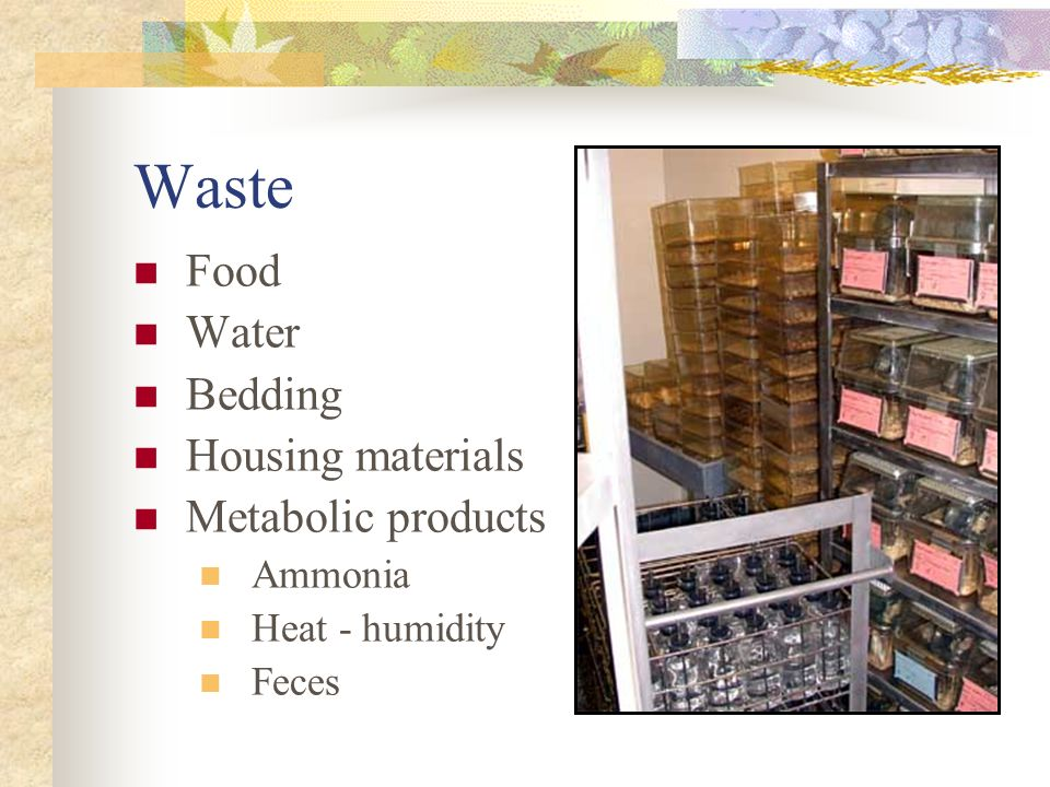 Waste Food Water Bedding Housing materials Metabolic products Ammonia Heat - humidity Feces