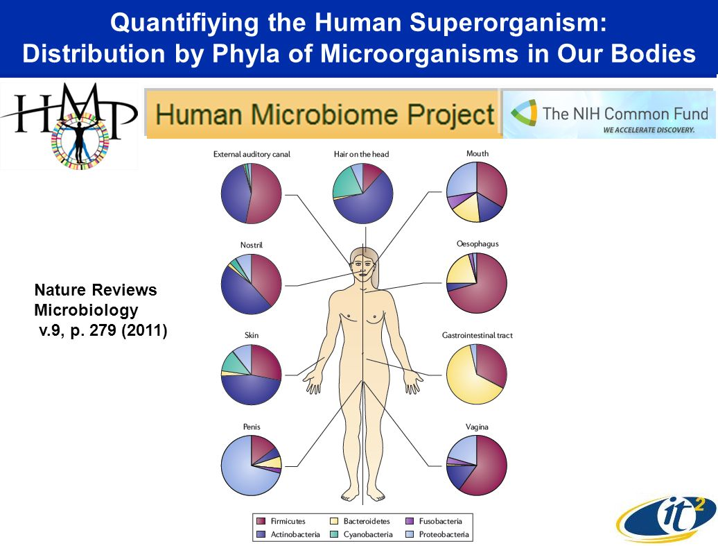 Quantifiying the Human Superorganism: Distribution by Phyla of Microorganisms in Our Bodies Nature Reviews Microbiology v.9, p.