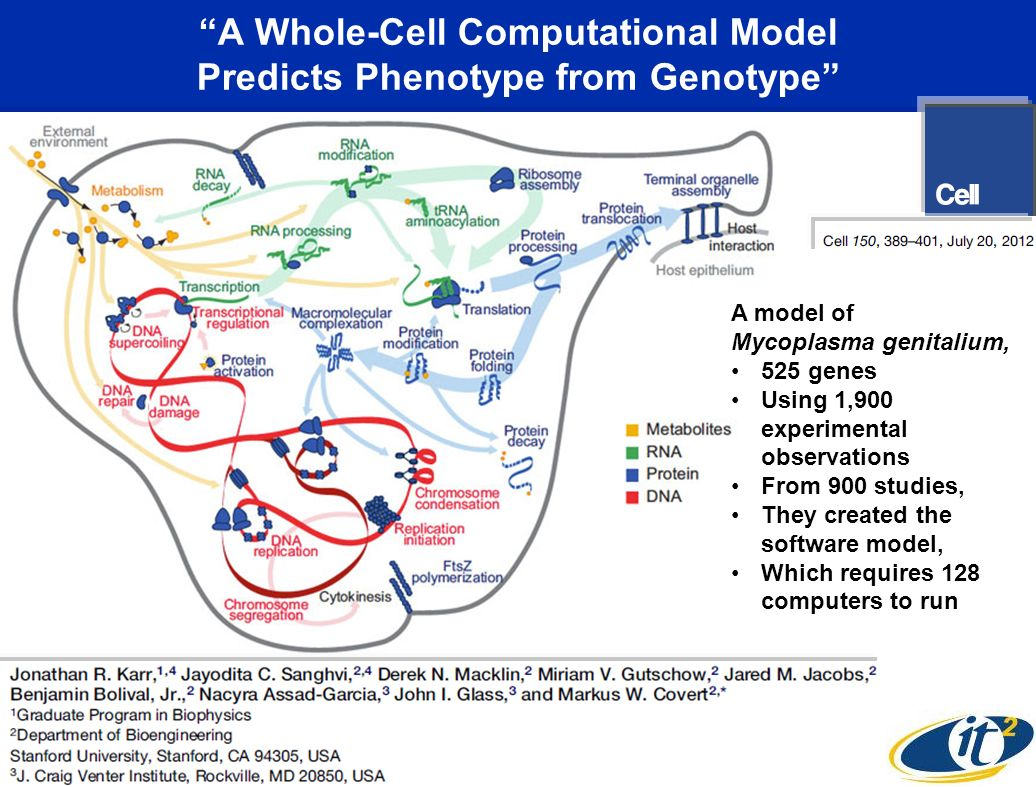 A Whole-Cell Computational Model Predicts Phenotype from Genotype A model of Mycoplasma genitalium, 525 genes Using 1,900 experimental observations From 900 studies, They created the software model, Which requires 128 computers to run