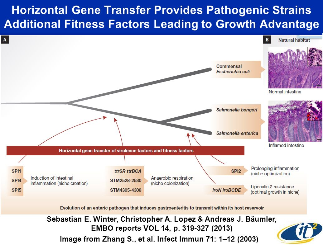 Horizontal Gene Transfer Provides Pathogenic Strains Additional Fitness Factors Leading to Growth Advantage Image from Zhang S., et al. Infect Immun 7