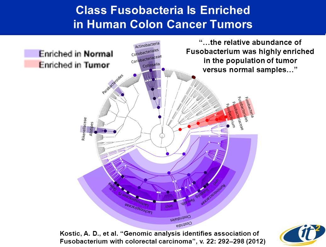 Class Fusobacteria Is Enriched in Human Colon Cancer Tumors Kostic, A. D., et al. Genomic analysis identifies association of Fusobacterium with colore