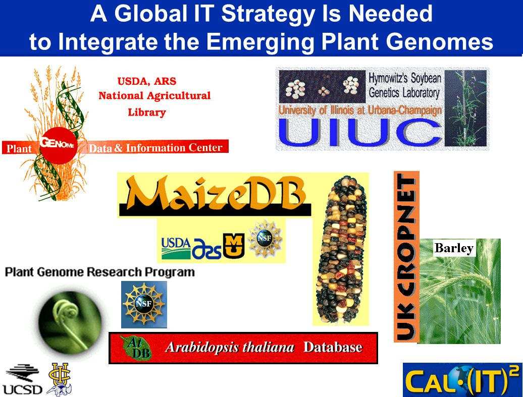 A Global IT Strategy Is Needed to Integrate the Emerging Plant Genomes