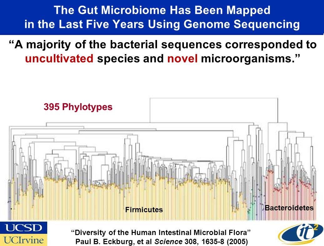 The Gut Microbiome Has Been Mapped in the Last Five Years Using Genome Sequencing A majority of the bacterial sequences corresponded to uncultivated s