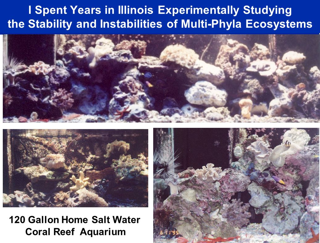 I Spent Years in Illinois Experimentally Studying the Stability and Instabilities of Multi-Phyla Ecosystems 120 Gallon Home Salt Water Coral Reef Aquarium