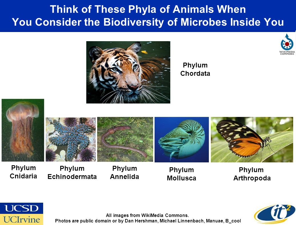 Think of These Phyla of Animals When You Consider the Biodiversity of Microbes Inside You All images from WikiMedia Commons.
