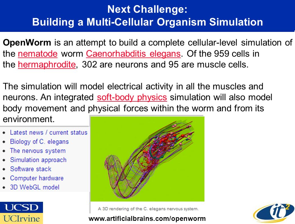 Next Challenge: Building a Multi-Cellular Organism Simulation OpenWorm is an attempt to build a complete cellular-level simulation of the nematode worm Caenorhabditis elegans.
