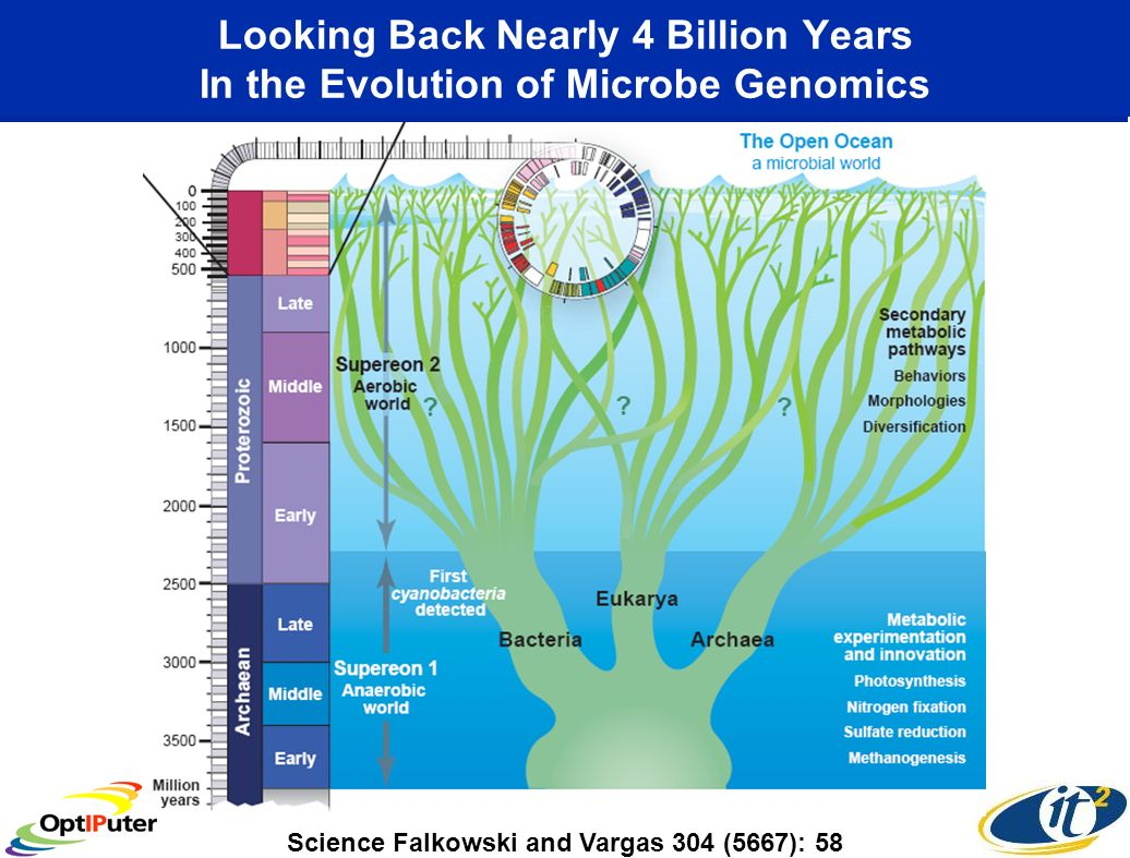 Looking Back Nearly 4 Billion Years In the Evolution of Microbe Genomics Science Falkowski and Vargas 304 (5667): 58