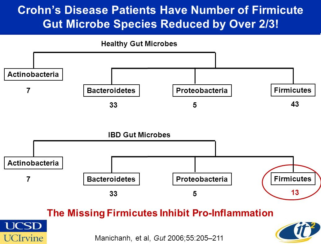 Crohns Disease Patients Have Number of Firmicute Gut Microbe Species Reduced by Over 2/3.