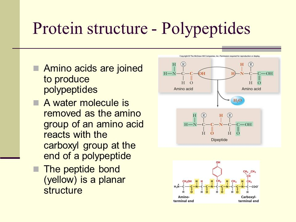 Protein structure – Protein folding Chemical interactions among amino acids determine the final 3D shape (conformation) of a protein
