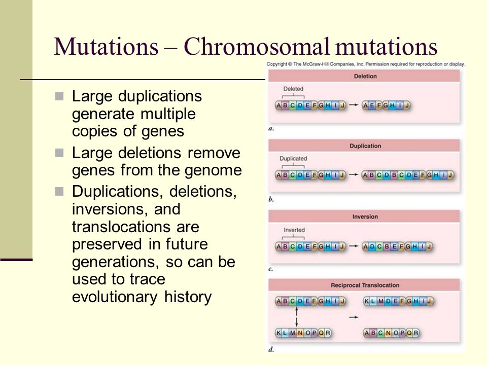 Mutations – effects on organisms Random mutation produces genetic variability that is acted upon by natural selection Most mutations are deleterious: mutations occur randomly, and are more likely to disrupt protein function than alter it in a positive way Deleterious mutations are eliminated by natural selection Rare mutations that introduce altered, even beneficial functions are positively selected