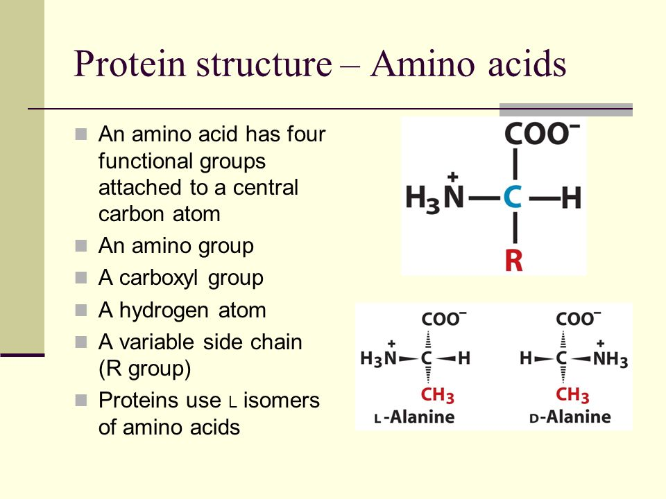 Protein structure – 20 amino acids are used in proteins Polar amino acid side chains have partial negative or positive electrostatic charges O and N atoms hog electrons and have partial negative charges Atoms attached to N and O have partial positive charges