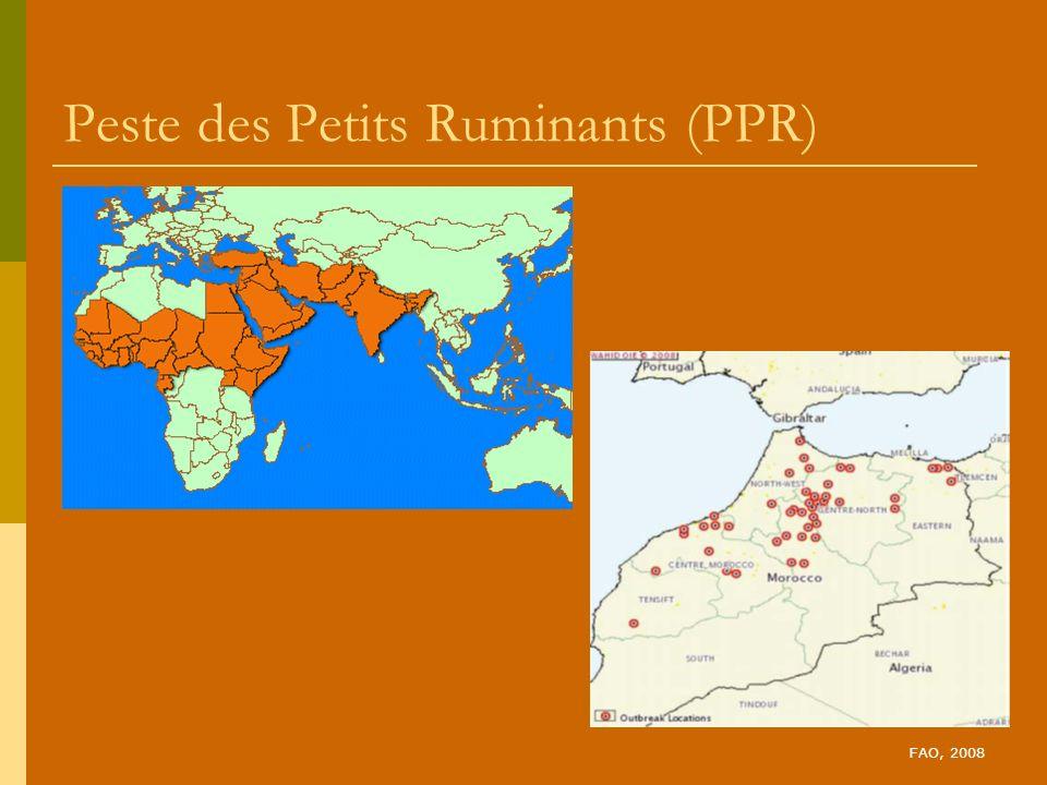 Peste des Petits Ruminants (PPR) FAO, 2008