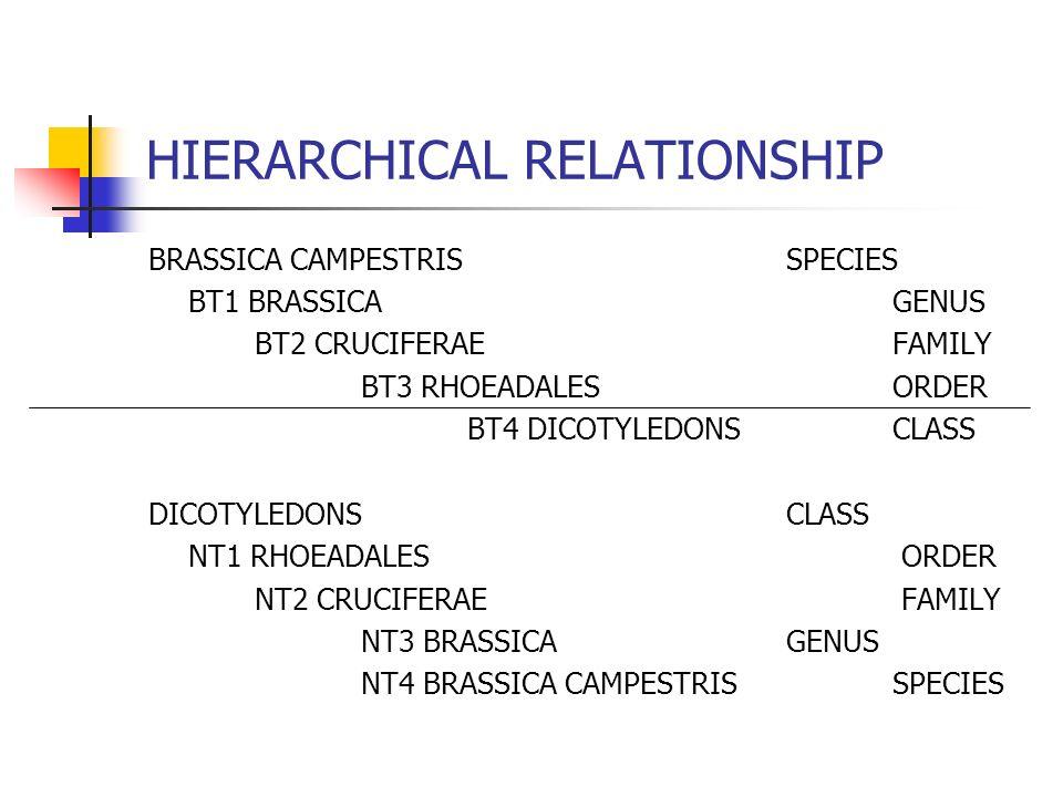 HIERARCHICAL RELATIONSHIP BRASSICA CAMPESTRISSPECIES BT1 BRASSICAGENUS BT2 CRUCIFERAEFAMILY BT3 RHOEADALESORDER BT4 DICOTYLEDONSCLASS DICOTYLEDONSCLASS NT1 RHOEADALES ORDER NT2 CRUCIFERAE FAMILY NT3 BRASSICAGENUS NT4 BRASSICA CAMPESTRISSPECIES