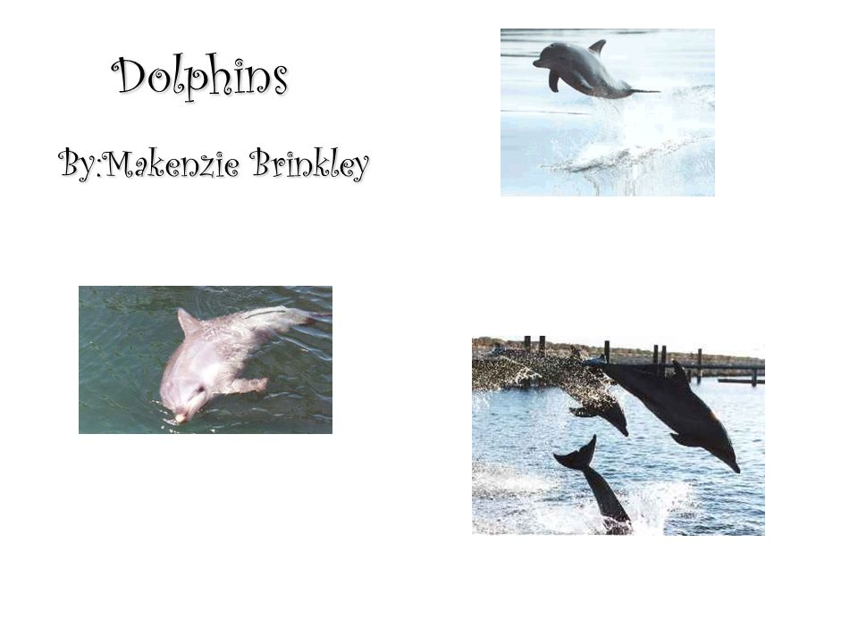 Dolphins By:Makenzie Brinkley