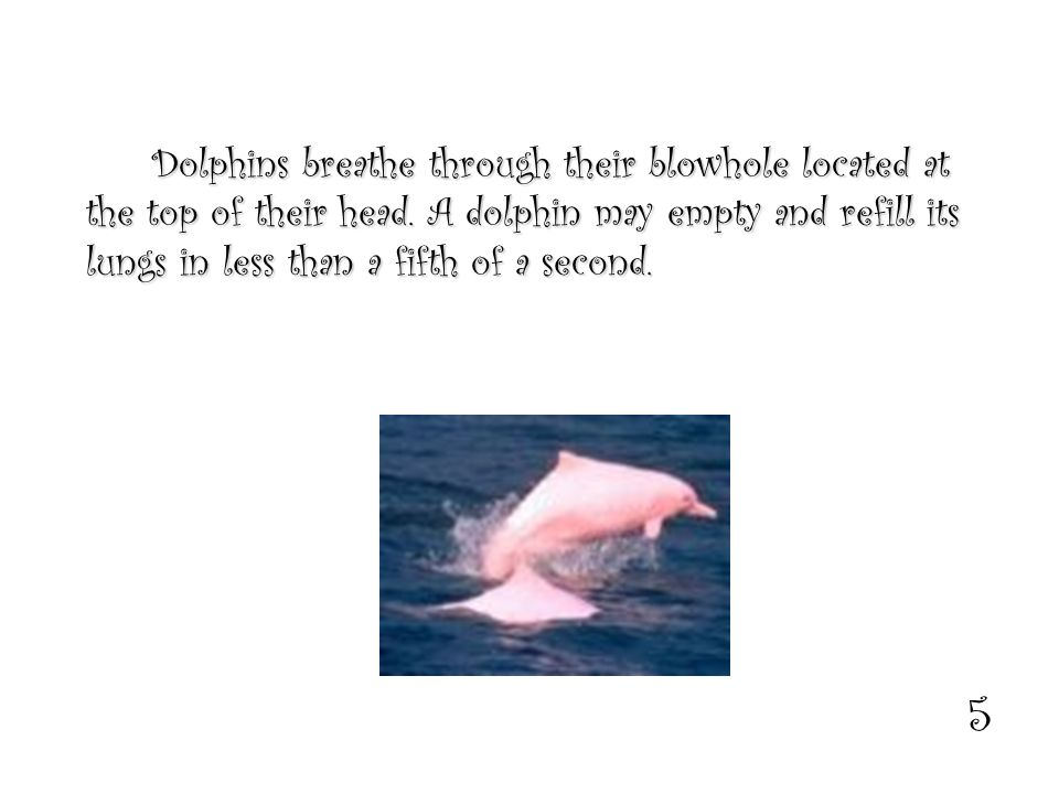 5 Dolphins breathe through their blowhole located at the top of their head.