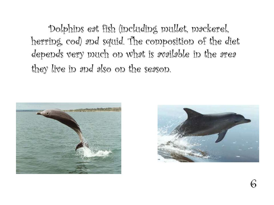 6 Dolphins eat fish (including mullet, mackerel, herring, cod) and squid.