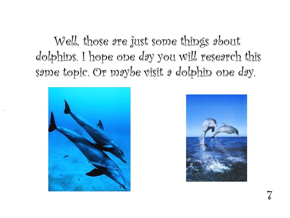 7 Well, those are just some things about dolphins. I hope one day you will research this same topic. Or maybe visit a dolphin one day.