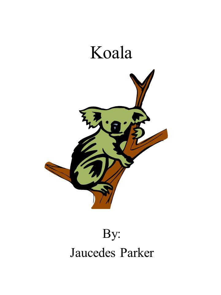 Koala By: Jaucedes Parker