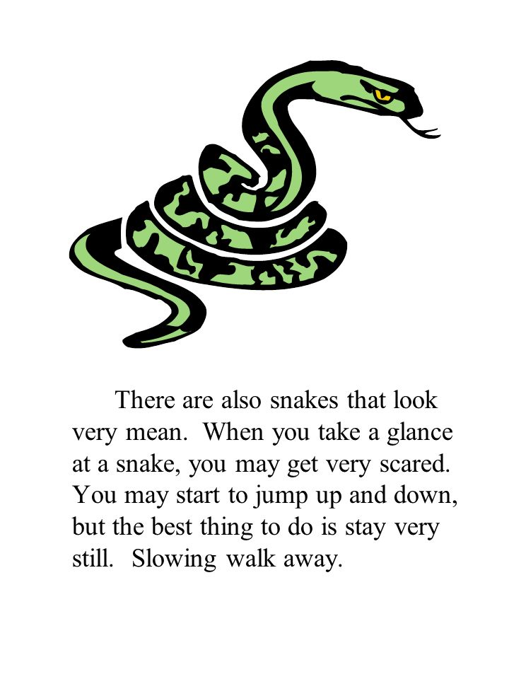 There are also snakes that look very mean. When you take a glance at a snake, you may get very scared. You may start to jump up and down, but the best