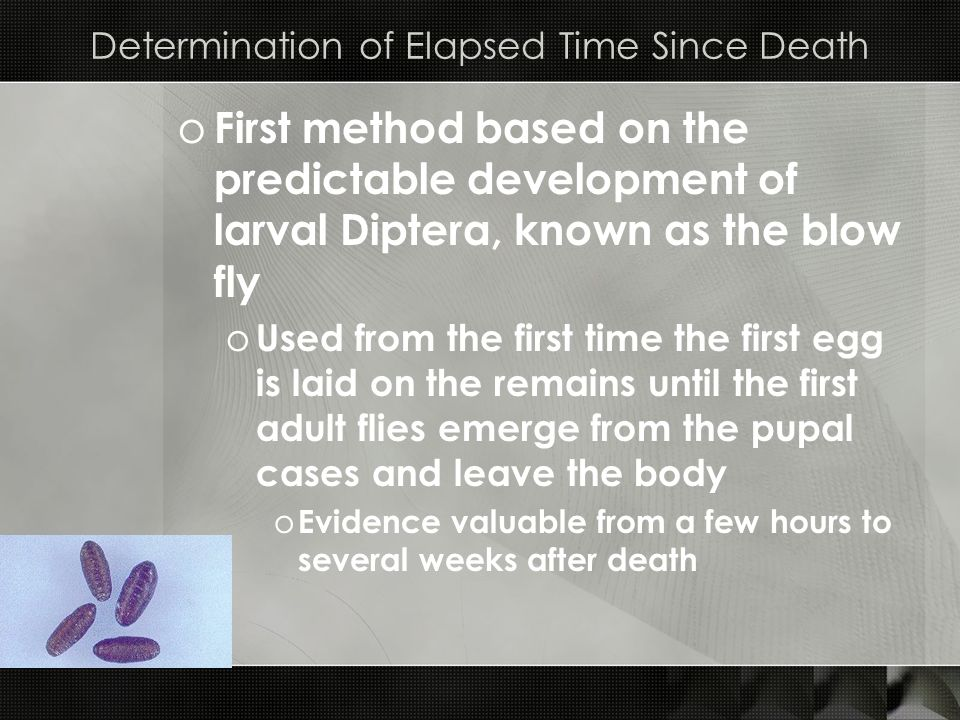Determination of Elapsed Time Since Death o First method based on the predictable development of larval Diptera, known as the blow fly o Used from the
