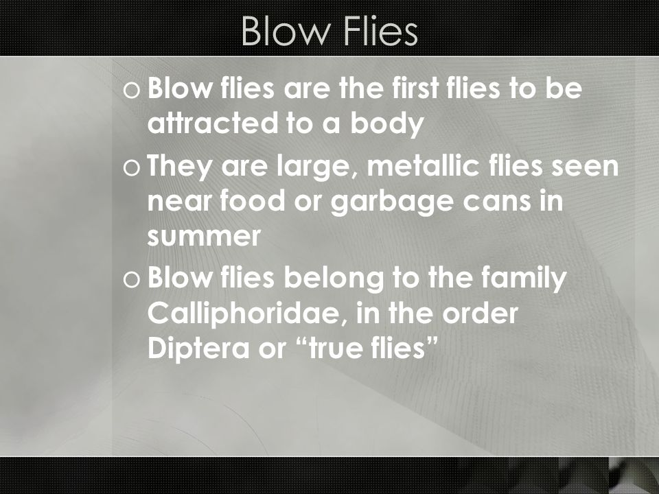 Blow Flies o Blow flies are the first flies to be attracted to a body o They are large, metallic flies seen near food or garbage cans in summer o Blow