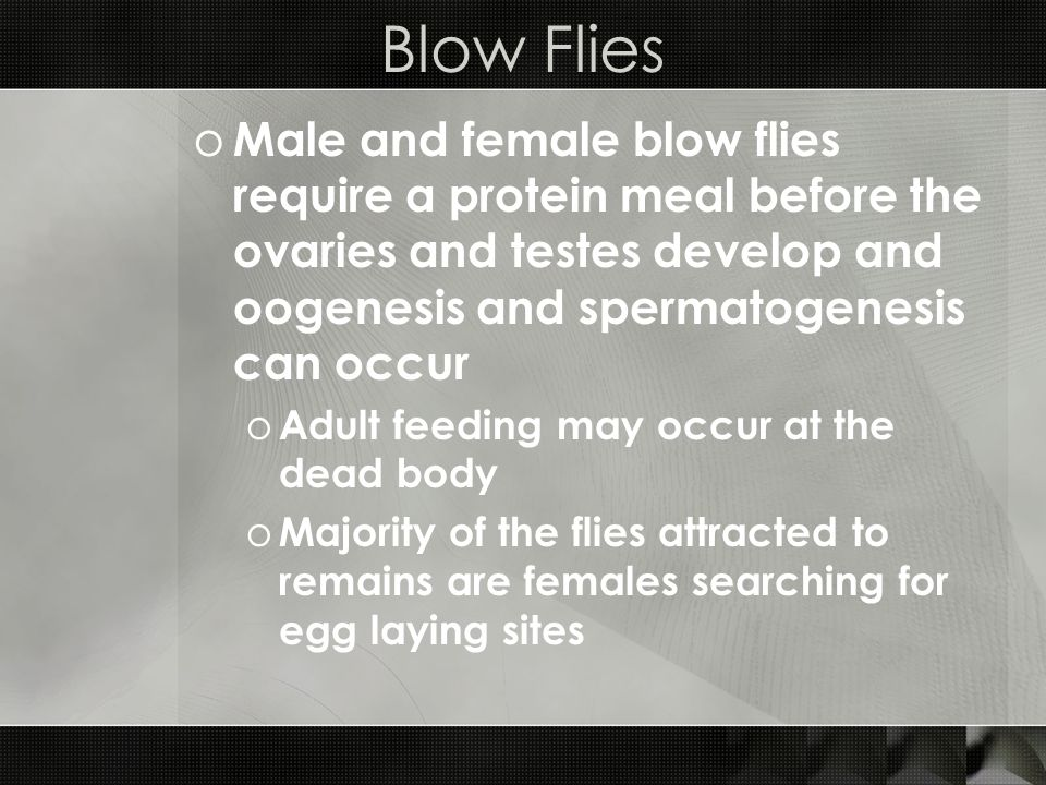 Blow Flies o Male and female blow flies require a protein meal before the ovaries and testes develop and oogenesis and spermatogenesis can occur o Adu