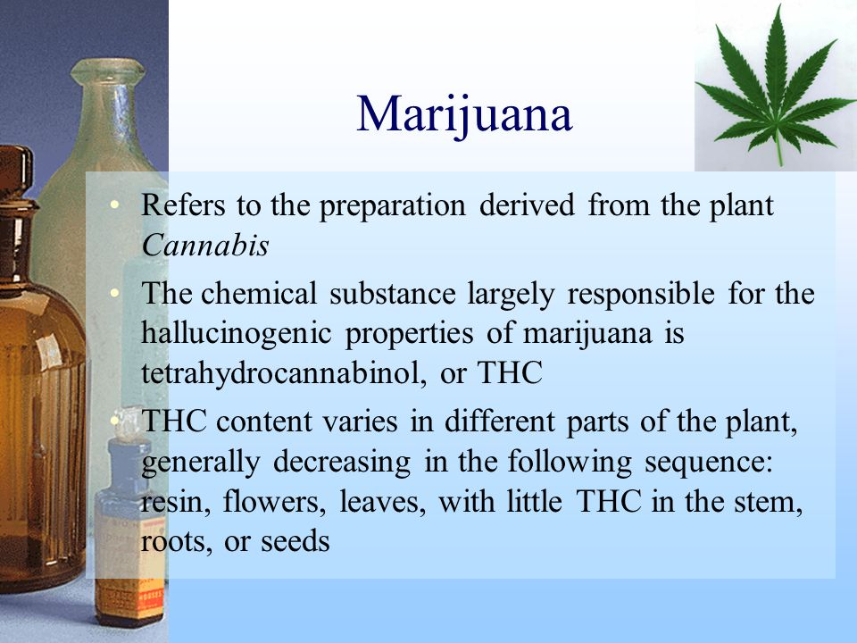 Marijuana Refers to the preparation derived from the plant Cannabis The chemical substance largely responsible for the hallucinogenic properties of ma