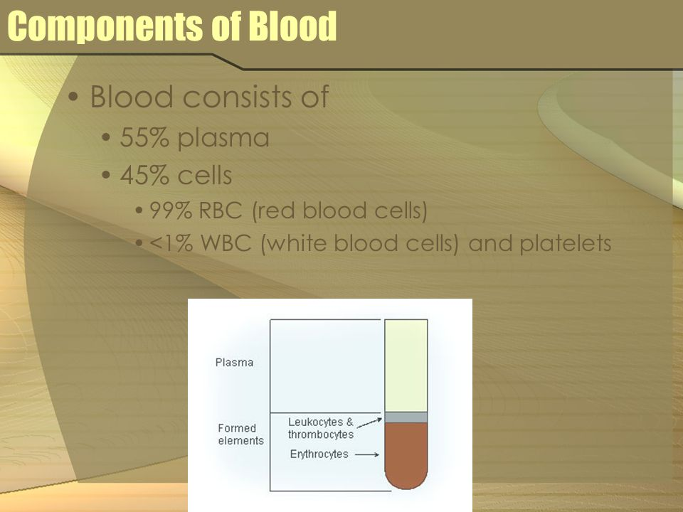 Components of Blood Blood consists of 55% plasma 45% cells 99% RBC (red blood cells) <1% WBC (white blood cells) and platelets