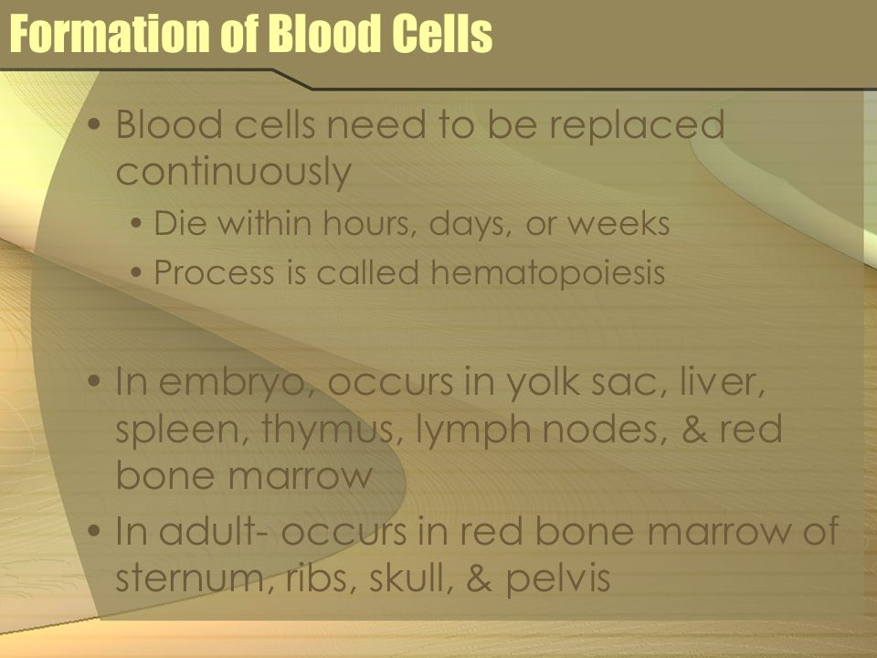 Formation of Blood Cells Blood cells need to be replaced continuously Die within hours, days, or weeks Process is called hematopoiesis In embryo, occu