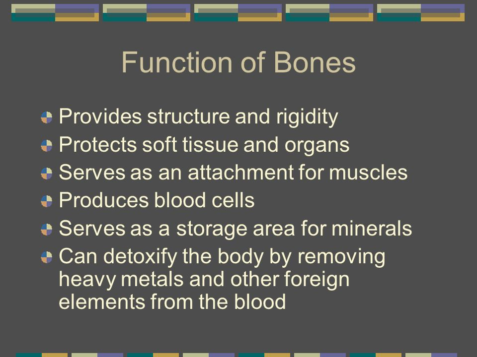 Function of Bones Provides structure and rigidity Protects soft tissue and organs Serves as an attachment for muscles Produces blood cells Serves as a