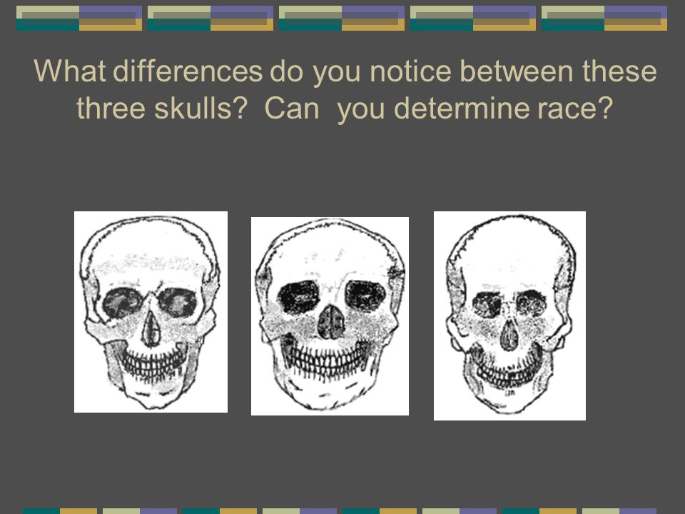 What differences do you notice between these three skulls? Can you determine race?