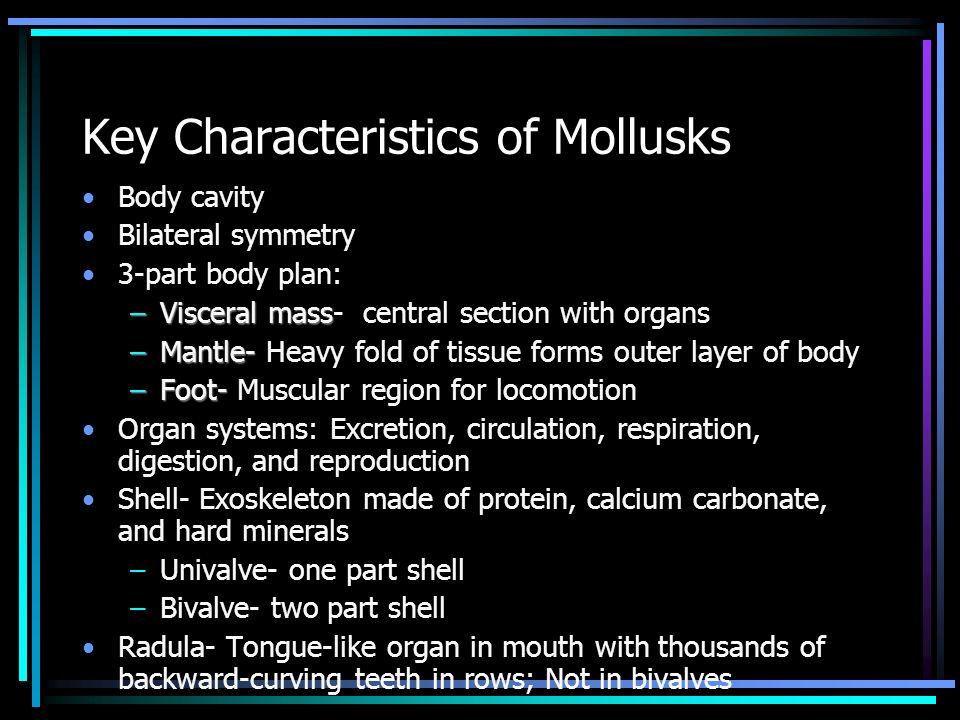 Mollusk Body Plan