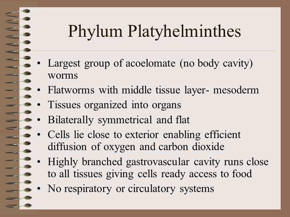 Phylum Platyhelminthes Largest group of acoelomate (no body cavity) worms mesodermFlatworms with middle tissue layer- mesoderm Tissues organized into