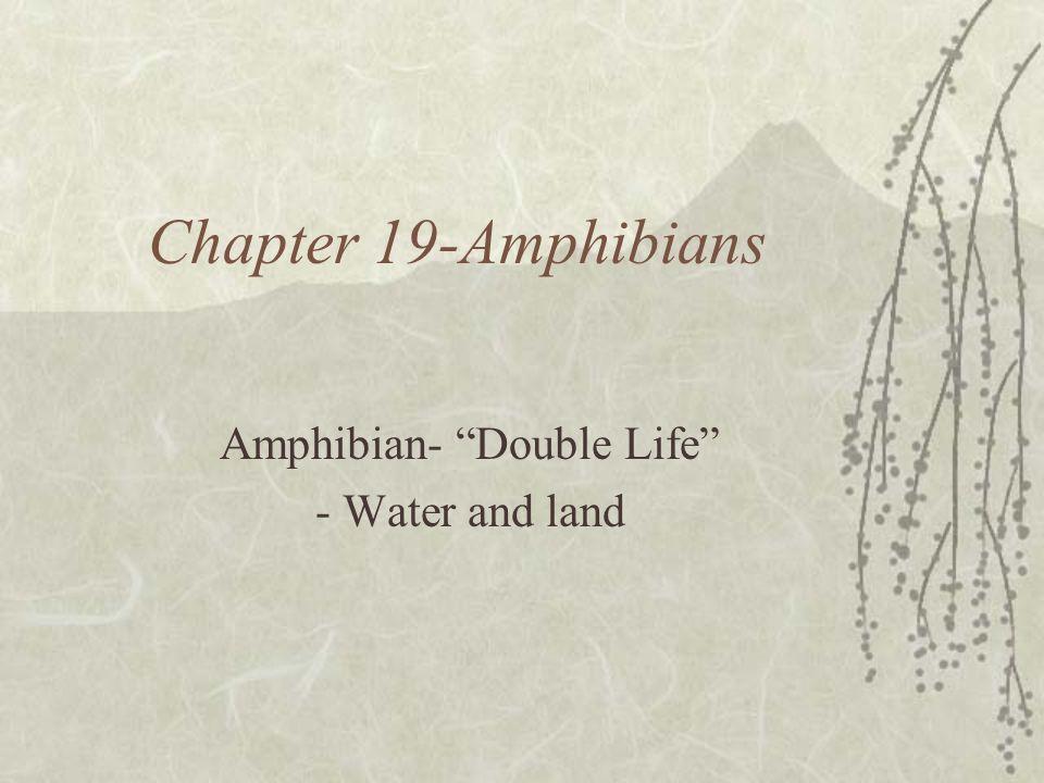 Chapter 19-Amphibians Amphibian- Double Life - Water and land