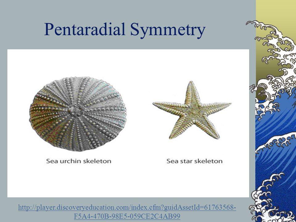 Pentaradial Symmetry http://player.discoveryeducation.com/index.cfm?guidAssetId=61763568- F5A4-470B-98E5-059CE2C4AB99